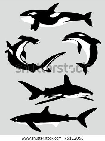 The collection of marine mammals - stock vector