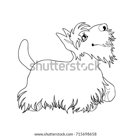the cute puppy of a dog of scottish terrier costs looking up and having raised a