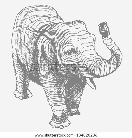 The elephant. Hand drawn vector illustration. - stock vector