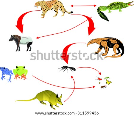 Food Chain Stock Images  RoyaltyFree Images   Vectors