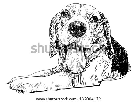 The front view of laying down beagle - stock vector