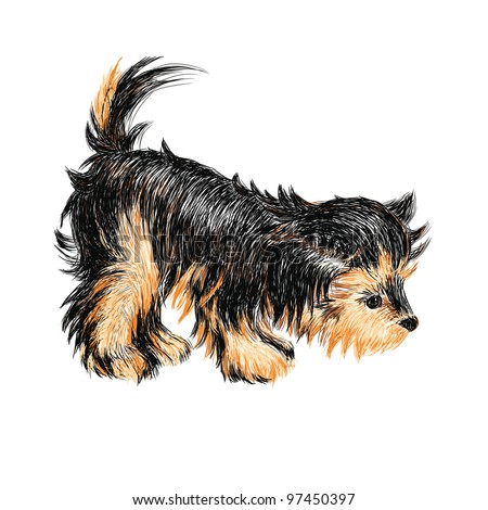 The  funny small  Yorkshire terrier  puppy.