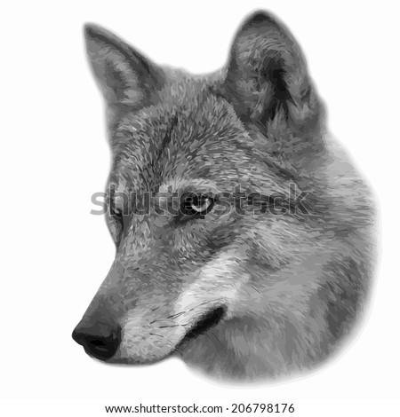 The head of a wolf female, isolated on white background. Side face portrait of a forest dangerous beast, Canis lupus lupus. Amazing gray scaled vector image. Great for user pic, icon, label, tattoo. - stock vector