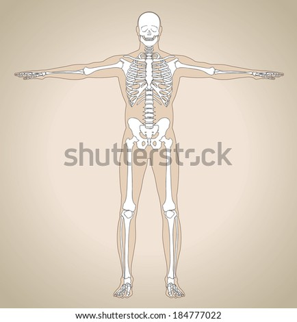 The human (male) skeleton. Scheme with flat view. Vector illustration