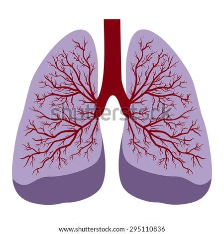 human lungs stock vector 506150854 - shutterstock, Cephalic Vein