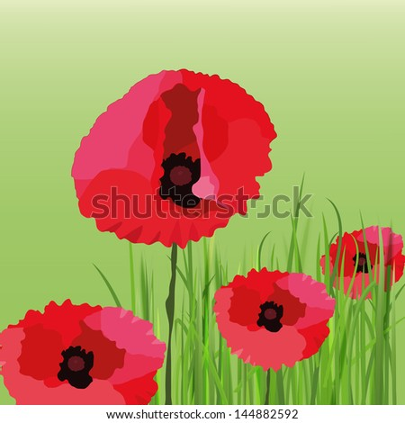 The illustration of beautiful poppy flower background. Vector image. - stock vector