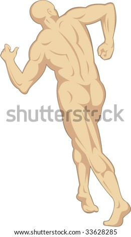 The male human anatomy facing the rear - stock vector