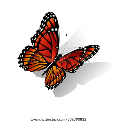 The Monarch butterfly Danaus plexippus vector on white - stock vector