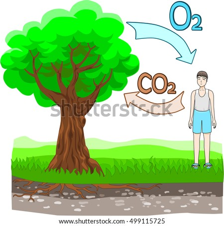 Oxygen cycle stock vector 499115725 shutterstock the oxygen cycle ccuart Images