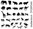 The representation of African animals - stock vector