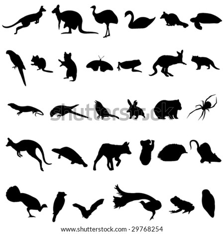 The representation of animals in Australia - stock vector