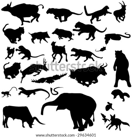 The representation of Asian animals