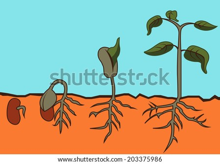 The section view of bean sprouts revolution step vector  - stock vector