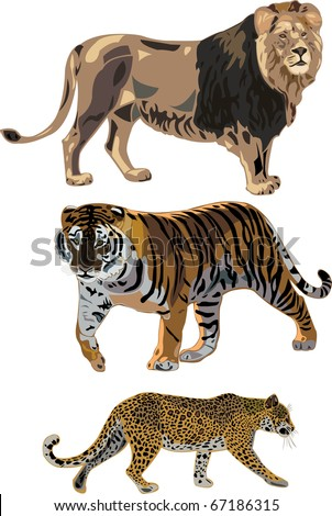 The three most popular feline carnivores - lion, tiger, leopard - stock vector