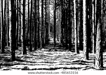 The trunks of the trees. forest background. Vector