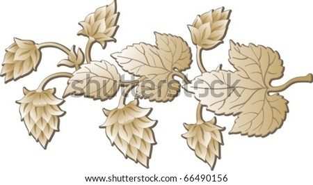 The  twig of hop - stock vector