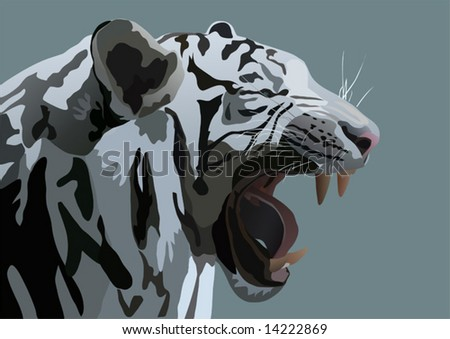 the vector illustration of white Bengal tiger