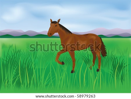 The wild horse grazes on a meadow