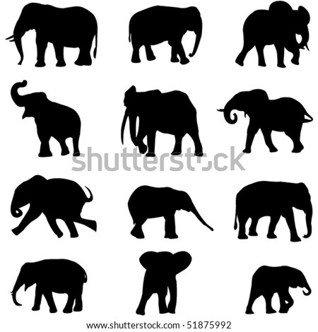 The world's three kinds of elephants:  the African savannah elephant , the African forest elephant and Asian elephant