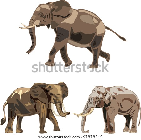 The world's three kinds of elephants:  the African savannah elephant , the African forest elephant and Asian elephant - stock vector