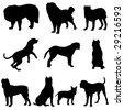 The world's top ten famous mastiff dog. - stock vector