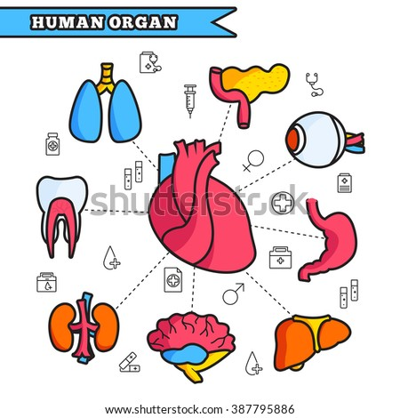 Thin lines style human organs set icons concept. Vector illustration design infographic - stock vector