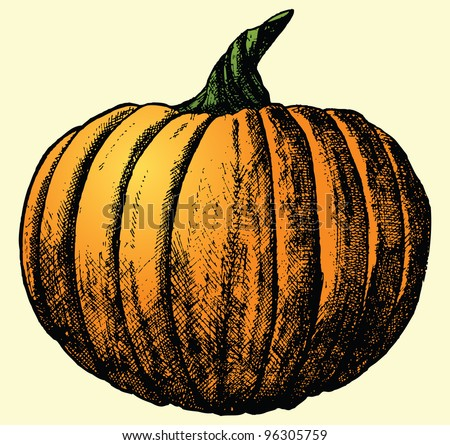 This is a hand drawn sketch of a pumpkin (sketch was live traced). - stock vector