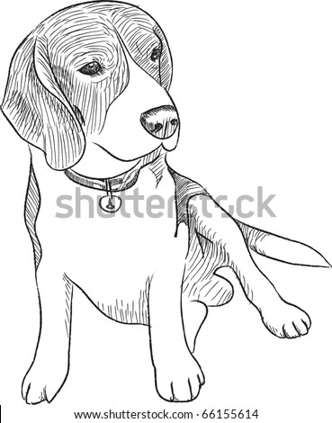 This is a vector file of Beagle sketch - stock vector