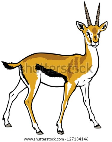 thomson gazelle,africa animal,side view picture isolated on white background,vector illustration - stock vector