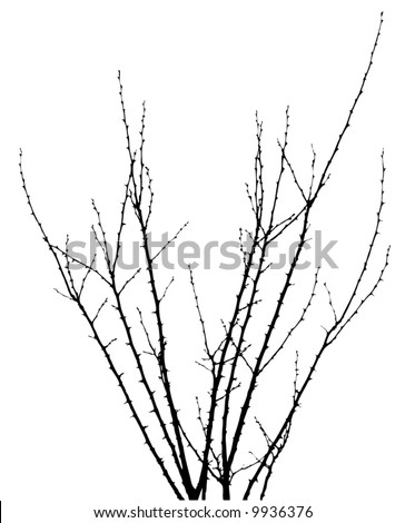 thorny branches - stock vector