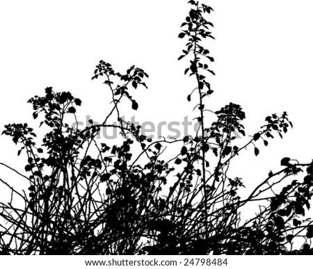 thorny bush - stock vector
