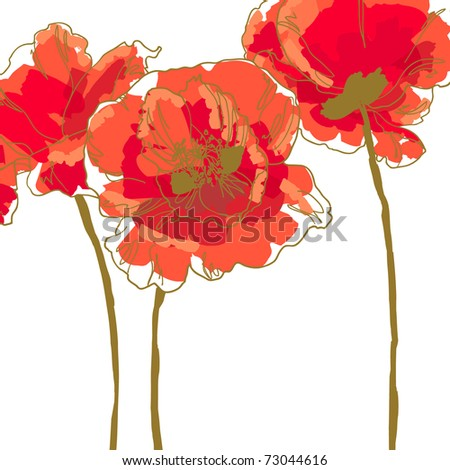 Three beautiful red poppy isolated on white background - stock vector