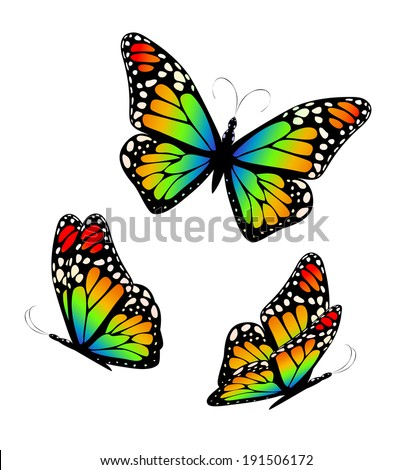 Three colorful rainbow butterflies. Vector - stock vector