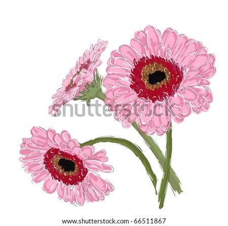 three daisy gerber, vector eps 10 - stock vector