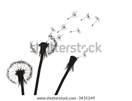 Three dandelions.  See more vector dandelions in my portfolio - stock vector