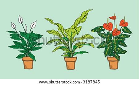 Three detailed interior plants in pot in colors. Anthurium, Spathiphyllum, Asplenium. - stock vector