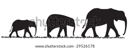 Three elephants of various size in a line - stock vector
