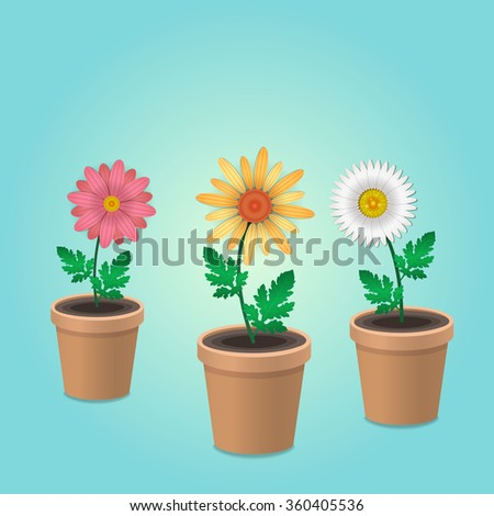 Three flowers in flower pots, Vector illustration.