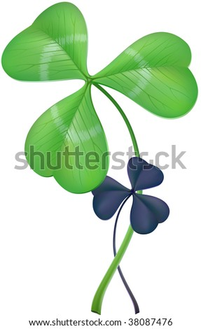 Three-leaf clover (lat. Trifolium, two different species). Vector, contains gradient mesh elements. See lucky four-leaf version in my portfolio! - stock vector