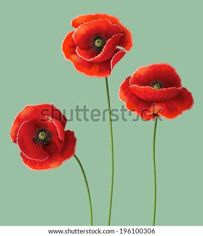 Three red poppy flowers.  - stock vector