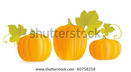 Three ripe yellow pumpkins and pumpkin leaves - stock vector