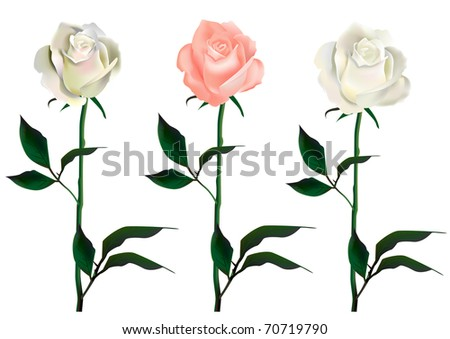 three vector roses template greeting cards stock vector 70719790