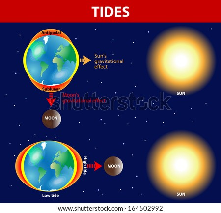 Tides depend where the sun and moon are relative to the Earth. Gravity and inertia creating tidal bulges on opposite sides of the planet. Vector diagram - stock vector