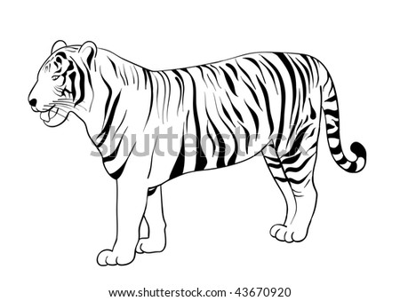 Tiger Drawing Isolated On The White