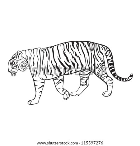 Tiger Drawing White and black - stock vector