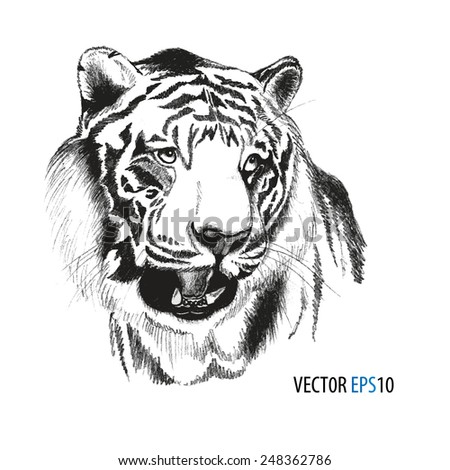 Tiger head hand drawn, original artwork tiger, black sketch drawing animal, isolated on white background, vector llustration - stock vector