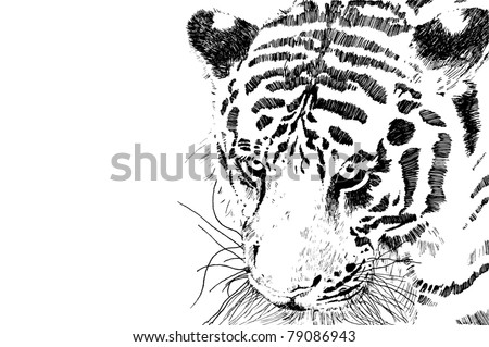 tiger head vector eps 10 of black and white tiger head isolated on white background with copy space - stock vector