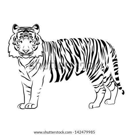 Tiger Outline Vector Stock Vector 142479985 - Shutterstock