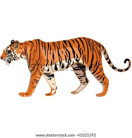 Tiger Series _ Bengal tiger - stock vector