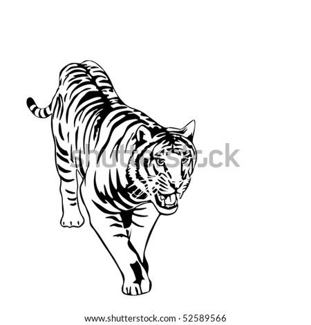 tiger vector illustration - stock vector